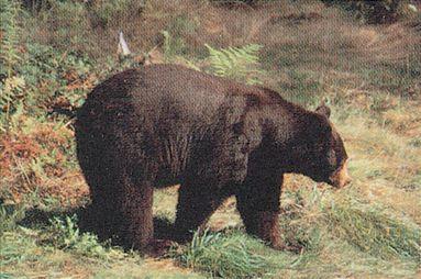 DELTA BLANCO PAPEL BEAR #104 70520